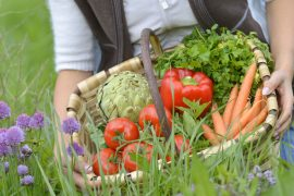 how-to-start-a-Vegetable-garden-wide